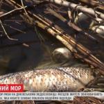 public://uploads/photos/2019-03-19_16_24_46-v_kirovogradskoy_oblasti_tonny_ryby_vybrosilis_na_bereg_-_korrespondent.net_-_o.png