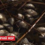 public://uploads/photos/2019-03-19_16_25_05-v_kirovogradskoy_oblasti_tonny_ryby_vybrosilis_na_bereg_-_korrespondent.net_-_o.png