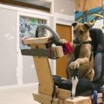 public://uploads/photos/driving_dogs_www.pixanews.com-11-680x453.jpg