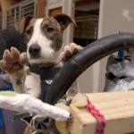 public://uploads/photos/driving_dogs_www.pixanews.com-12-680x453.jpg