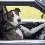public://uploads/photos/driving_dogs_www.pixanews.com-2-680x453.jpg