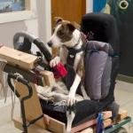 public://uploads/photos/driving_dogs_www.pixanews.com-5-680x453.jpg