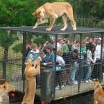 public://uploads/photos/zoo2_0.jpg