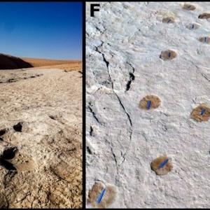 В Саудовской Аравии нашли отпечатки ног, которым около 120 тыс. лет. Фото