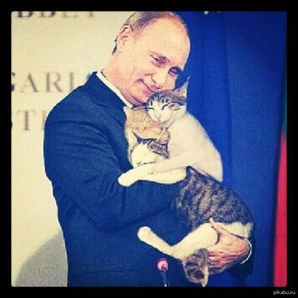 Кот и путин картинки