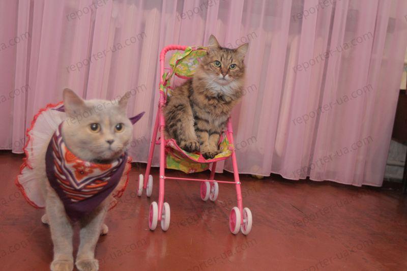 куклачев как дрессировать кошек видео